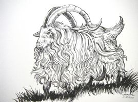Biggest Billy Goat by HouseofChabrier
