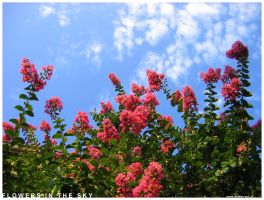 Flowers in the sky by dethita