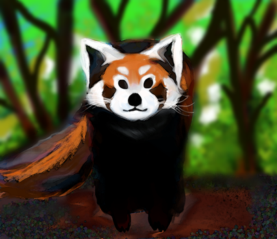 red panda by oceansigh