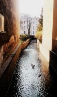 Pigeon in the river alley. by Evelcja