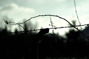 barbed wire by stupidduck