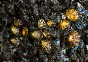 Limpet by Santy79