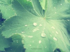 Spring Droplets. by Sparkle-Photography