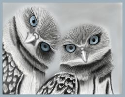 Blue eyed Owls by Faircloth-DigiTalArt