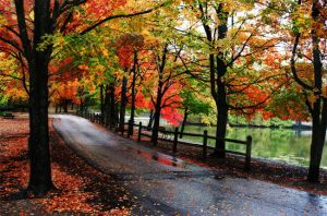 Fall in the Park by GallamorePhotography