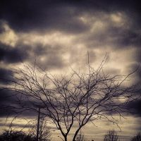 The Lonely Tree Surrounded by Clouds by RockyRoxas13