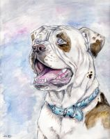 American Bulldog Colors of K9s by ebonytigress