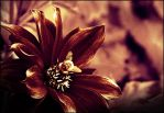 Flower by Bl1ghtmare