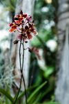 MOBOT: 2011 Orchid Exhibit IX by breaking-reality