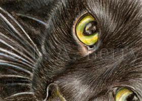 Just Looking....ACEO Black Cat by bigcatdesigns