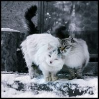Meow by Anca-Mihaela