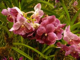Orchid9 by Otoff