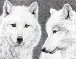 Arctic Wolves by mwford