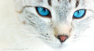 Baby Blue Eyes 2 by HuckNaz