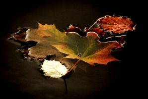 Leaves in water by ArtistsForCharity
