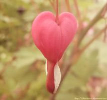 .:Lonely Heart:. by LT-Arts