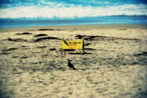 No Swimming, Surfing Only by bernbass