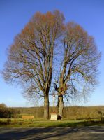 tree with crucifix by Mittelfranke