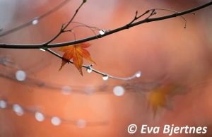 After The Rain by Eva-Fe