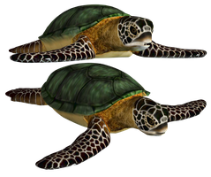 Sea Turtle PNG Stock by Roys-Art