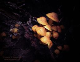 Shrooms by TammyPhotography