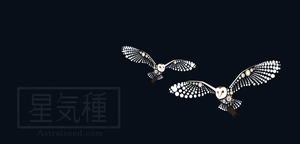 Barn Owls by Astralseed