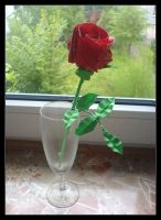 5-petal Kawasaki Rose by lonely--soldier