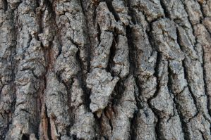 Tree Texture Stock 2 by mrwit
