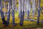 Forest Of Color by kkart