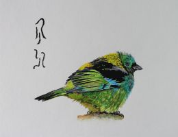Green-headed Tanager by Boio8010