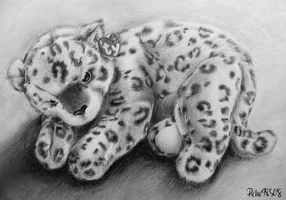 snow leopard by pichu4850