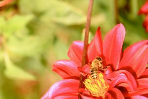 The Bee by LENA3689