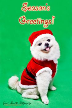Season's Greetings Dog by pinay-malaya