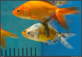 Fish Stock 0040 by phantompanther-stock