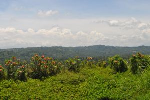 Mountain View at Robinsons by tinelijah