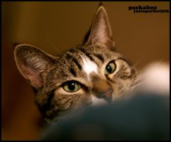 Peekaboo - By: justaperfect5th by photohunt