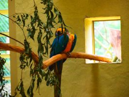 Blue and yellow macaw by Hotelfachfrau