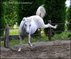 Alison - Stock 13 by Horses--Stock