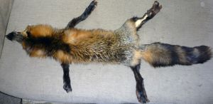another cross by Tricksters-Taxidermy