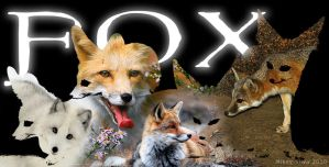 Photoshop - Fox by Stitchfan