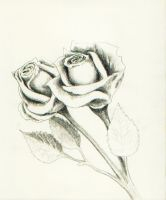 two roses by acasas