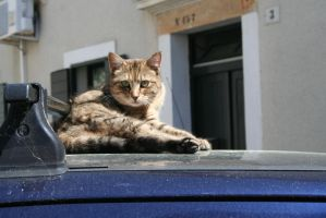 Hallo from relaxing cat by ingeline-art