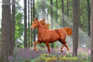 Tequila Sunrise by JuneButterfly-stock