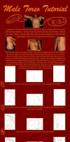 Male Torso Tutorial by kimberly-castello