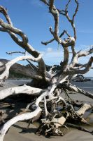 Twisted Driftwood by ppdigital