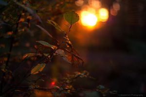 ~ Sunset ~ by MaelstromPhotography