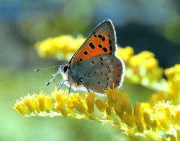 Butterfly by Ehmer