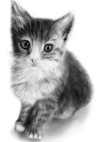 Cat Pencil Drawing 2 by slippy88