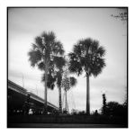 2015-018 Palmettos by the bridge by pearwood