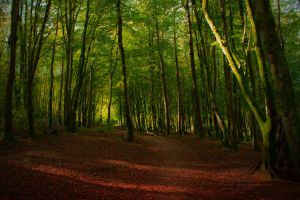 Forest scene  01 Stock October 2015.. by WelshDragonStockNArt